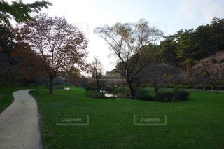 緑豊かな緑のフィールドの真ん中の木の写真・画像素材[976461]