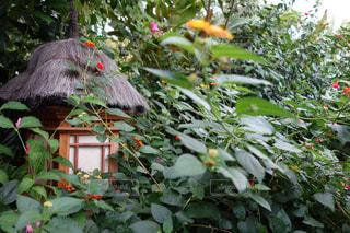 庭の植物の写真・画像素材[976478]