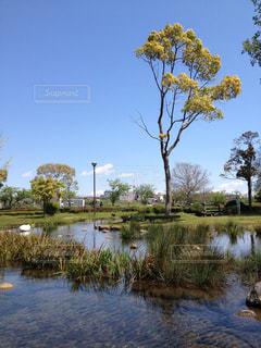 水の体の横にある池の写真・画像素材[976779]