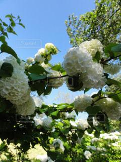 近くの花のアップの写真・画像素材[979479]