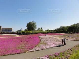 草の覆われたフィールド上を歩く人々 のグループの写真・画像素材[979485]