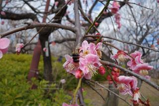 植物にピンクの花の写真・画像素材[980124]
