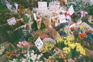 花の写真・画像素材[1900908]
