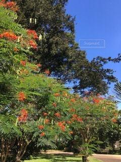 花の写真・画像素材[29228]