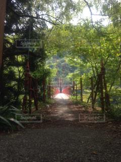自然の写真・画像素材[275170]