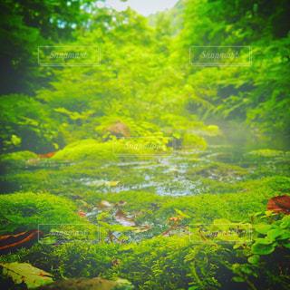 自然の写真・画像素材[605560]