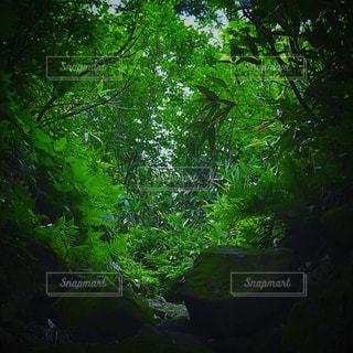 森林の写真・画像素材[671960]