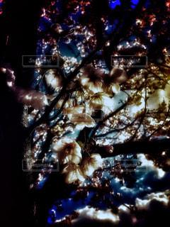 桜の花のアップの写真・画像素材[2021493]