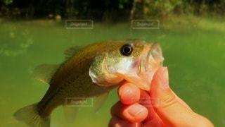 No.70119 魚