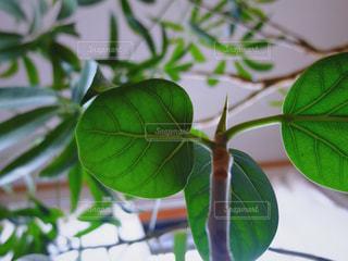 観葉植物の写真・画像素材[3054784]