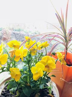 植物の花の写真・画像素材[2136938]