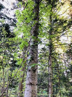 森の木の写真・画像素材[2136998]