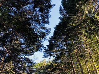 森の木の写真・画像素材[2137077]
