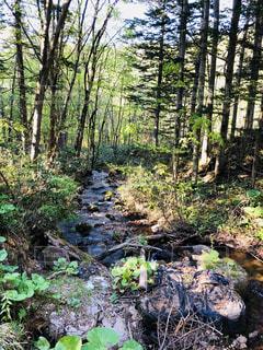 森の中の木の写真・画像素材[2137114]