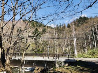 森の川に架かる橋の写真・画像素材[2137117]