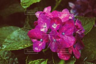 雨の写真・画像素材[1971869]