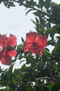 花の写真・画像素材[1994006]