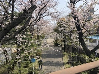 桜並木の写真・画像素材[1987595]