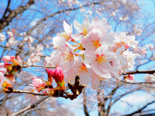 春の訪れの写真・画像素材[1990962]