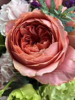 薔薇の写真・画像素材[2212807]