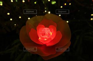 真紅の薔薇の写真・画像素材[1905374]