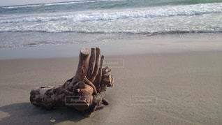 砂浜の流木の写真・画像素材[999758]