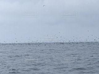 鳥山の写真・画像素材[1928715]