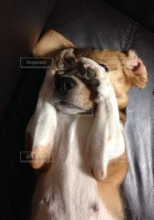 犬の写真・画像素材[70208]