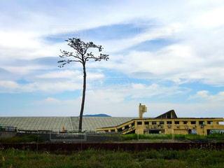 背景の木と大規模なグリーン フィールドの写真・画像素材[1917427]