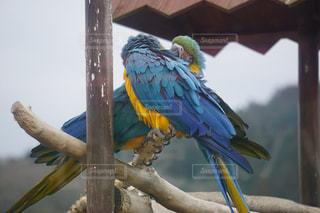 カラフルな鳥の上に座っているオウムが枝に腰掛けの写真・画像素材[1907792]