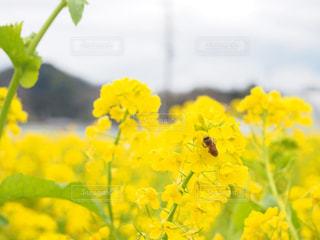黄色の花の写真・画像素材[1905889]