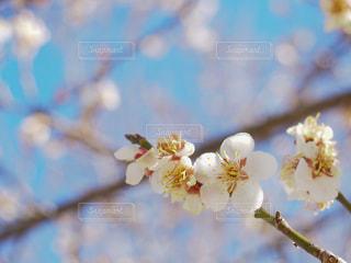 花のアップの写真・画像素材[1906538]
