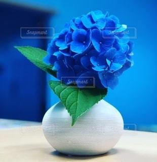 真っ青な紫陽花の写真・画像素材[2686472]