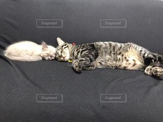 地面に横になっている猫の写真・画像素材[1908121]