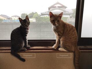 窓の前に座っている猫の写真・画像素材[1908221]