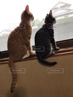 窓の前に座っている猫の写真・画像素材[1908223]