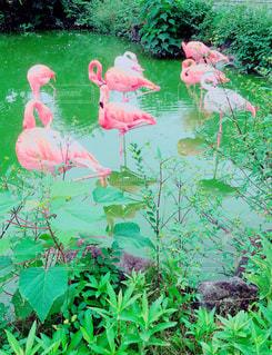 Flamingoの写真・画像素材[1921913]