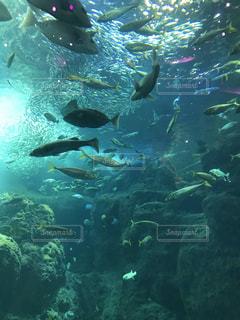 魚群発生の写真・画像素材[2010961]