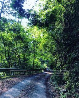 原生林へと続く人工的な道の写真・画像素材[1933680]
