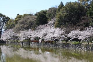 空と桜と水との写真・画像素材[1907985]