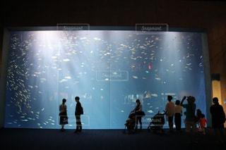 水族館の大きな水槽の写真・画像素材[3343995]
