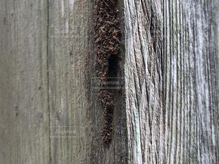 木のクローズアップの写真・画像素材[2276157]