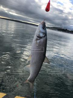 水の中の魚を握って男の写真・画像素材[1939648]