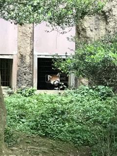 れんが造りの建物の前に庭の写真・画像素材[1942237]