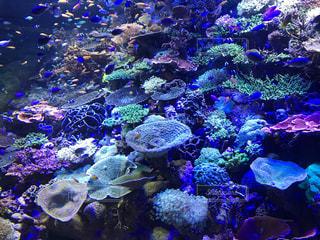 珊瑚と魚たちの写真・画像素材[1949610]