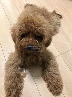 犬の写真・画像素材[2250962]