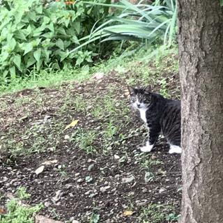 森の隣に座っている猫の写真・画像素材[2372828]