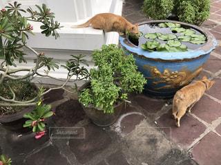 庭の植物の写真・画像素材[2409534]