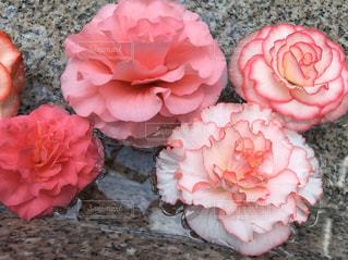 ピンクの花のグループの写真・画像素材[3281212]