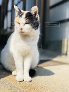 近所にいた野良猫ちゃんの写真・画像素材[1910457]